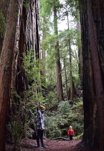 Jedidiah Redwood Forest, California - Stout Grove